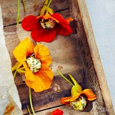 Now we're getting fancy! Stunning, edible Nasturtium blooms are filled with an herby goat cheese mixture to create these oh-so-pretty appetizers. /