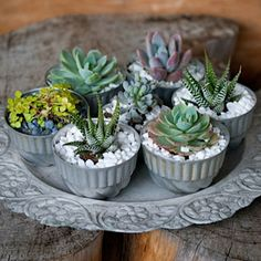Jello-Mold-Succulents   can also use votive candle holders