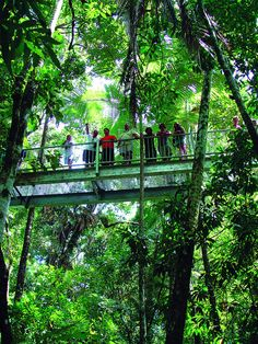 Rainforest Tours | Cape Tribulation & Daintree Rainforest Australia