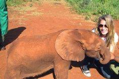 A Tela da Reflexão: Gisele Bundchen faz campanha em prol dos elefantes...