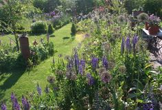 Shabby Soul:Sunday garden - My country cottage garden and sweetpea, a must have plant in a cottage garden