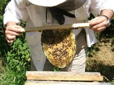 top bar bee hive: coming soon to my home.