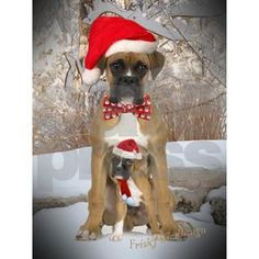 Image from http://i3.cpcache.com/product_zoom/313310467/boxer_amp_puppy_christmas_scene_greeting_cards_.jpg?height=460&width=460&padToSquare=true.