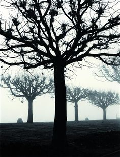 Nebel am See Photography Exhibition, World Photography, Artistic Photography, Travel Photography, Fine Art Photo, Photo Art, Otto Steinert, Examples Of Art, Bare Tree