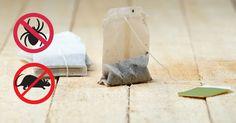 Um das Ungeziefer im Haus los zu werden, benötigst du nur eine Sache. Benutzte Teebeutel! Nicht jeder Tee eignet sich hierfür. Am besten ist Pfefferminztee. Spinnen mögen den Geruch von Pfefferminze absolut nicht. Sobald sie ihn wahrnehmen, werden sie flüchten. Setze einfach eine Tasse Pfefferminztee. Diese kannst du natürlich herrlich trinken. Die benutzten Teebeutel legst …