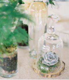 55 Gorgeous Glass Cloche Bell Jar Wedding Ideas – Page 9 – Hi Miss Puff Bridal Shower Centerpieces, Succulent Centerpieces, Jar Centerpieces, Succulent Pots, Potted Succulents, The Bell Jar, Bell Jars, Bridal Shower Rustic, Bridal Showers