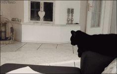 Canto dos Gatinhos: GIFS engraçados de Gatos =^..^=