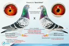 Best Kittel, the discovery of a new world class bird | PIPA