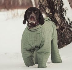 German Shorthaired Pointer : Instagram of the day