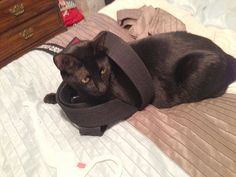 "From Noretta Kelly... ""This is BC, he likes to wrap himself in my black belt. I guess he believes he is a ninja.""  For the month of October, Cat Faeries is celebrating black cats. We will post pictures of our customer's cuties and donate 1% of our October sales to several black cat rescue groups. You can find out more at www.catfaeries.com/blog/celebrating-black-cats-in-october/"