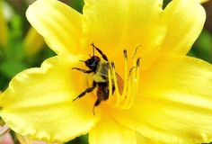 Hovering over flower!