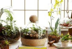 The 11 Best Plants To Grow In Your Terrarium - HAVE to keep this in mind!!!