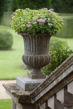 Sedum planted in an Ornamental Urn