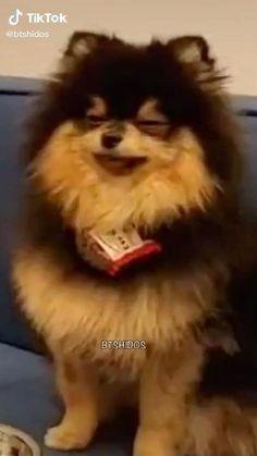 Namjoon, Bts Taehyung, Bts Memes Hilarious, Bts Funny Videos, Suga Funny, Foto Bts, K Pop, Bts Dogs, Kpop Gifs