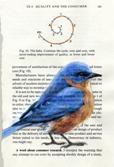 Eastern Bluebird / Quality of the Consumer by Paula Swisher