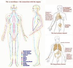 Hand reflexology: 12 meridians & the connection with the organs.