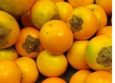 fruit trees in panama - Google Search