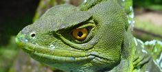 Reptile Laws for Every State