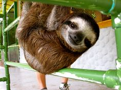 Look at this baby sloth, Cory. | An Inside Look At What It's Like To Be Surrounded BySloths