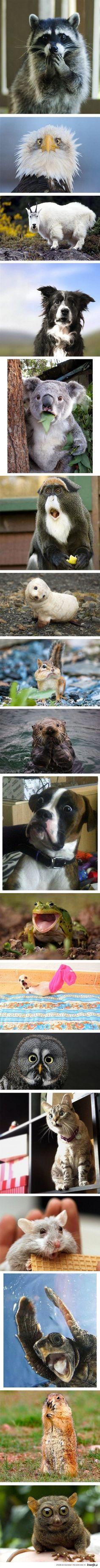 Zaskoczone zwierzęta