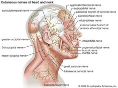 Not really painright side of head feels tighttired since tues how many nerves in the face bing images body diagramlymphatic massage head ccuart Image collections