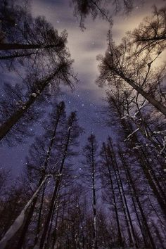 Forest below, sky above.filled with stars Pretty Pictures, Cool Photos, Nature Landscape, Fantasy Landscape, Nature Nature, Landscape Photos, Landscape Architecture, Landscape Wallpaper, Nocturne