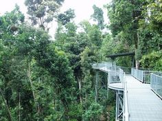 borneo rainforest canopy walkway | Rainforest Canopy Walkway, Borneo – The Amazing Canopy Walkway | Top ...