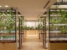 Green office building, Tokyo, Japan. Building has fruit trees, tomato vines, rooftop garden & a rice paddy.  Design: Kono Designs, NYC.