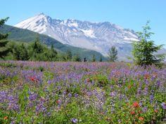 scenery, flowers