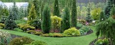Juniperus communis 'Stricta' Physocarpus opulifolius 'Darts Gold' Picea pungens f. Outdoor Landscaping, Front Yard Landscaping, Landscaping Tips, Evergreen Garden, Evergreen Trees, Garden Shrubs, Garden Borders, Pergola Designs, Vegetable Garden Design