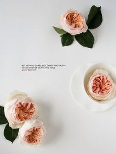 But he who dares not grasp the torn should never crave the rose - Anne Bronte