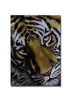 TIGER 26 portrait big cat feline pencil painting Sandrine Curtiss Art Limited Edition Print ACEO by Sandrinesgallery