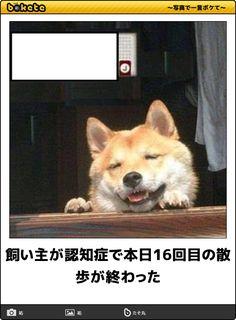 記事提供:CuRAZY Animals And Pets, Baby Animals, Funny Animals, Cute Animals, Funny Photos, Cool Photos, Haha Funny, Funny Memes, Japanese Dogs