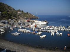 Ustica - Palermo - Opiniones de Ustica - TripAdvisor