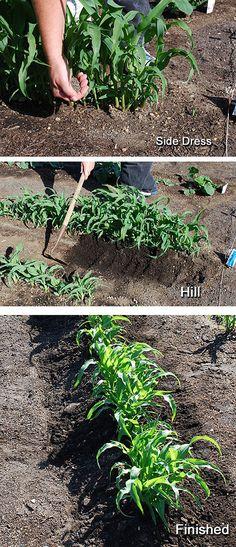 Lots of good vegetable garden tips. http://vur.me/s/Organic-Gardening/