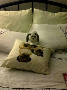 #bunnies #acute #rabbit
