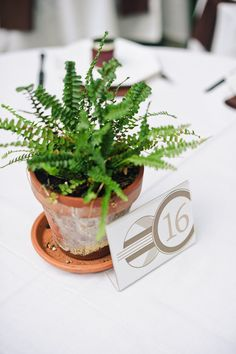 Simple potted fern for table numbers/centerpiece. Photography by kenkienow.com