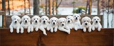 Advise new owners about everything puppies need.