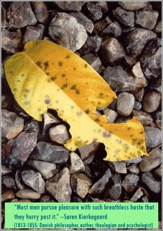 A fallen leaf at the Lawachara National Park in Sylhet, Bangladesh