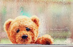 Missing You  8x12 fine art print-sad teddy bear with rain drops on window