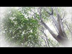 MBN - 리얼다큐 숨 황칠나무의 모든 것 고려황칠 - YouTube