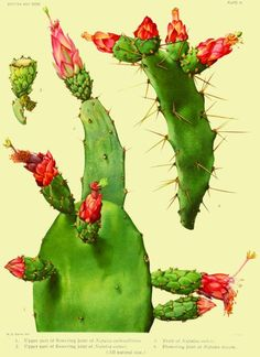Cactus Juice to Waterproof Mortar