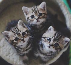 Tres hermanitos bellos.