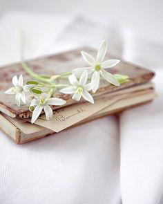 Lovely♡Books
