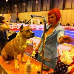 Foto poniendo guapos a los participantes en la Exposición Internacional Canina 100x100 Mascota durante los días 25 y 26 de mayo de 2013 en Madrid