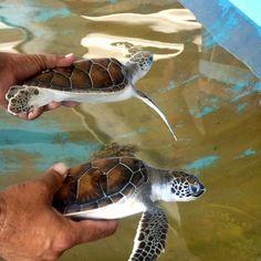 Turtles by Erik Cleves Kristensen, via Flickr