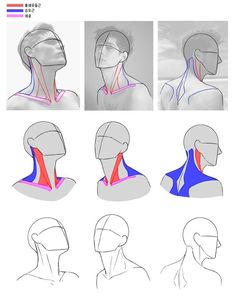 Male face angles riphaei montes on Body Reference Drawing, Anatomy Reference, Art Reference Poses, Drawing Proportions, Drawing Heads, Drawing Poses, Neck Drawing, Drawing Lessons, Drawing Tips