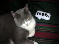 I want to make these. Tang would have loved them.    Speech Bubble Cat Toys - Neatorama