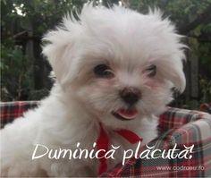 Motto, Good Morning, Case, Dogs, Facebook, Bicycle Decor, Buen Dia, Bonjour, Pet Dogs