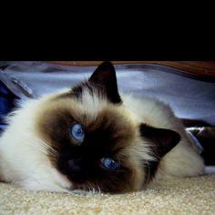 Indy those blue eyessss